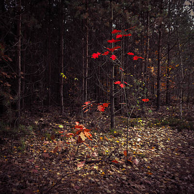 Photograph - Red Drops by Dmytro Korol