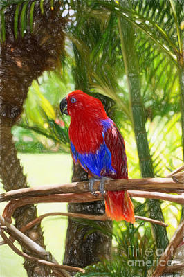 Photograph - Red Eclectus Parrot by Sue Melvin