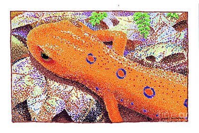 Newts Drawing - Red Eft by Paul Kmiotek