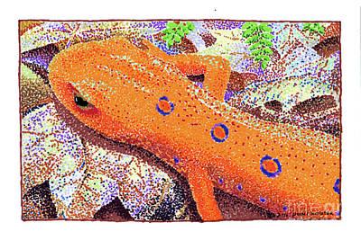 Salamanders Drawing - Red Eft by Paul Kmiotek
