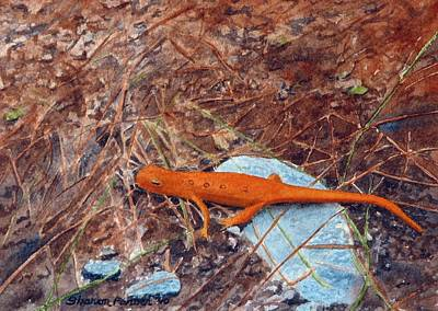 Salamanders Painting - Red Eft Salamander by Sharon Farber
