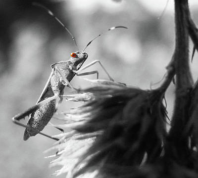 Photograph - Red Eye  by Martha Ayotte