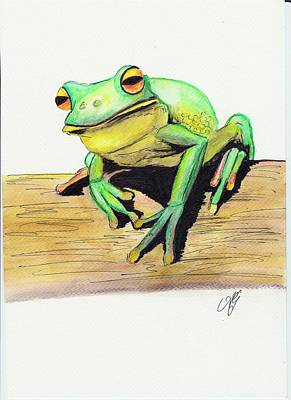 Painting - Red Eyed Tree Frog 2 by Anne Gardner