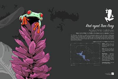 Digital Art - Red-eyed Tree Frog Infographic by Marcus England