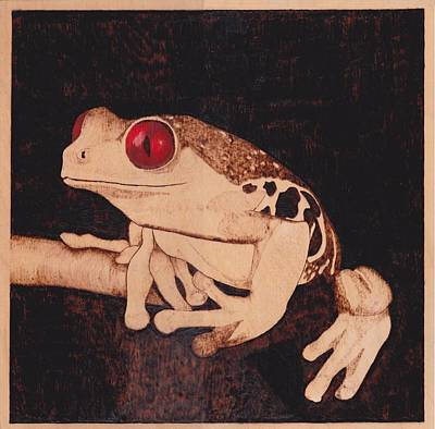 Pyrography On Wood Pyrography - Red Eyed Tree Frog by Marsha Wilson