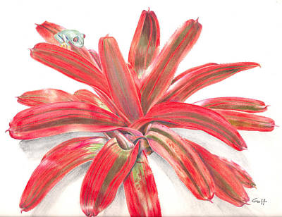 Neoregelia Painting - Red-eyed Tree Frog On Bromeliad by Penrith Goff