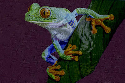 Red Eyed Tree Frog Original Oil Painting 4x6in Art Print by Manuel Lopez