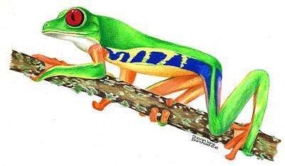 Wetlands Drawing - Red Eyed Tree Frog by Sharon Blanchard