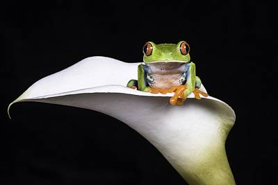 Animal Digital Art - Red Eyed Tree Frog by Super Lovely