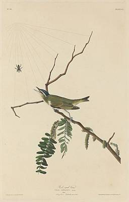 Red Eye Drawing - Red-eyed Vireo by Dreyer Wildlife Print Collections