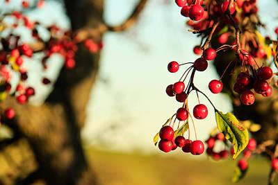 Photograph - Red Fall Berries by Joni Eskridge