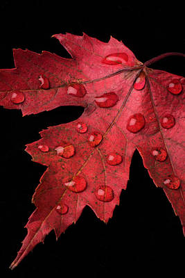 Red Beads Photograph - Red Fall Leaf With Dew by Garry Gay