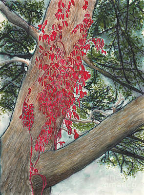 Watercolor With Pen Mixed Media - Red Fall Vines On Big Old Tree by Conni Schaftenaar