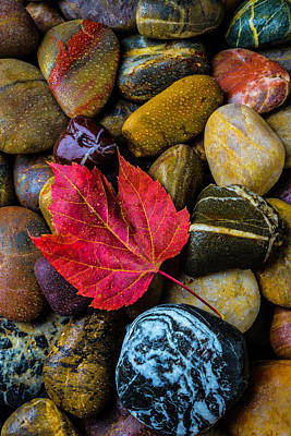Red Fallen Leaf On River Stones Art Print