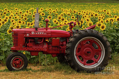 Photograph - Red Farmall Tractor by Barbara Bowen