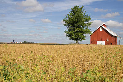 Photograph - Red Farms September by Dylan Punke