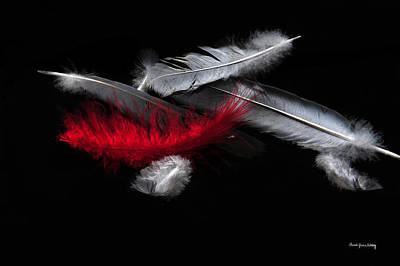 Photograph - Red Feather by Randi Grace Nilsberg