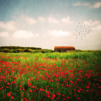 Red Field Art Print by Philippe Sainte-Laudy