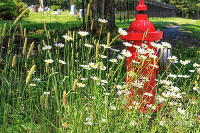 Photograph - Red Fire Hydrant With Daisies  by Elizabeth Dow