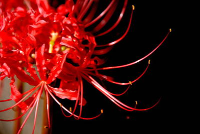 Realistic Art Photograph - Red Flames by Susanne Van Hulst
