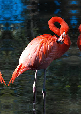 Photograph - Red Flamingo by Gene Norris