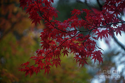 Photograph - Red Flourish Of Autumn by Mike Reid