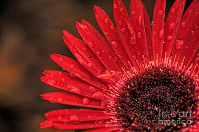Red Flower 2 Of 2 Art Print