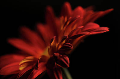 Print featuring the photograph Red Flower 5 by Sheryl Thomas