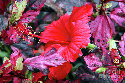 Photograph - Red Flower by Inspirational Photo Creations Audrey Taylor