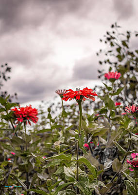 Photograph - Red Flower Grey Sky by Wayne King
