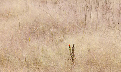 Photograph - Red Flower In A Sea Of Grass by Melinda Fawver