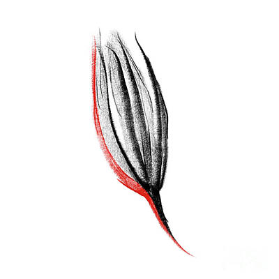 Blooming Drawing - Red Flower by Konstantin Sevostyanov