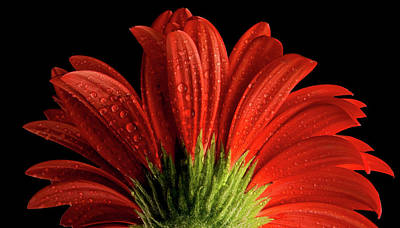 Photograph - Red Flower Macro by Lilia D