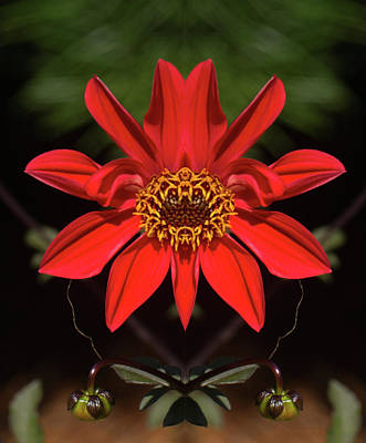 Photograph - Red Flower Pareidolia by Constantine Gregory