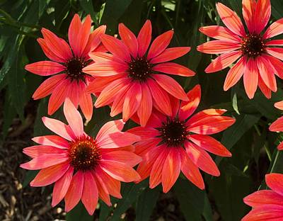 Photograph - Red Flowers 2 by Charles HALL