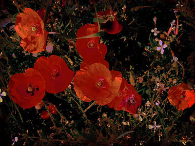 Photograph - Red Flowers 6 by Cristina Ortiz