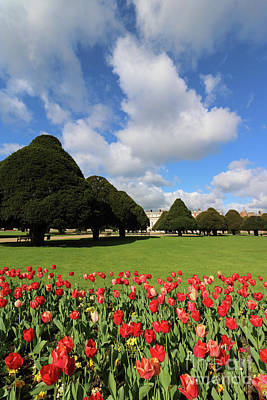 Photograph - Red Flowers At Hampton Court by Julia Gavin