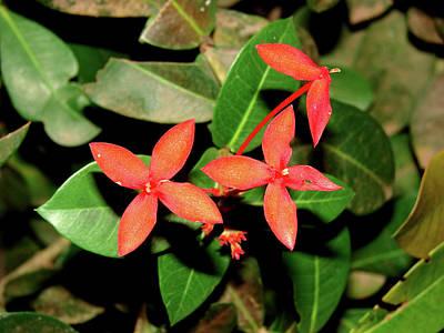 Photograph - Red Flowers by Brett Winn