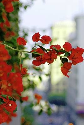 Photograph - Red Flowers Downtown Los Angeles Street View Portrait by Matt Harang