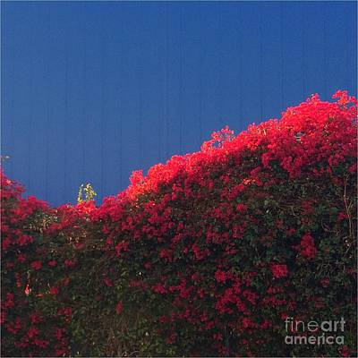 Photograph - Red Flowers II by Sarah Vandenbusch