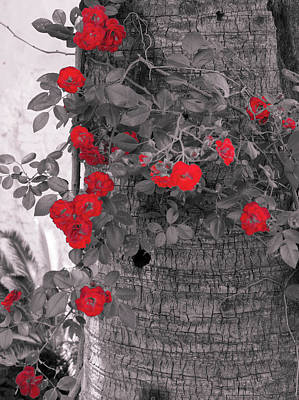 Photograph - Red Flowers In Spring by Andrea Mazzocchetti