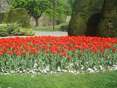 Red Flowers In The Kalemegdan Park In Belgrade Art Print