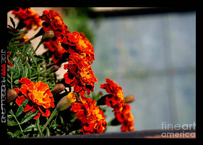 Red Flowers Original by Joe Maggellano
