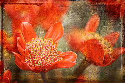Red Flowers Print by Larry Marshall