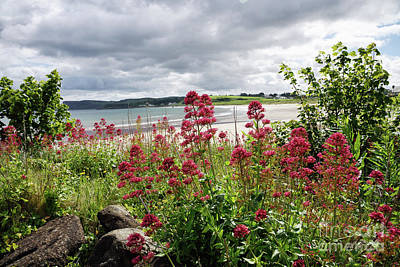 Photograph - Red Flowers Near A Beach In Northern Ireland by Vizual Studio