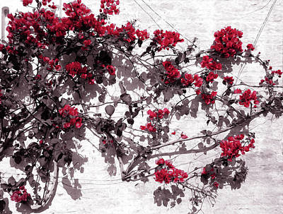 Painting - Red Flowers On White Walls by Andrea Mazzocchetti