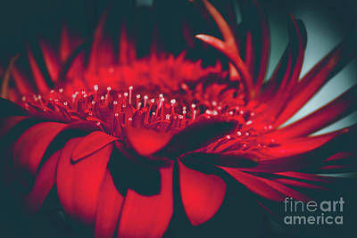 Print featuring the photograph Red Flowers Parametric by Sharon Mau