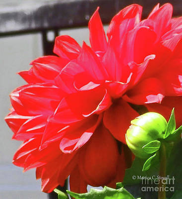 Photograph - Red Flowers R20 by Monica C Stovall