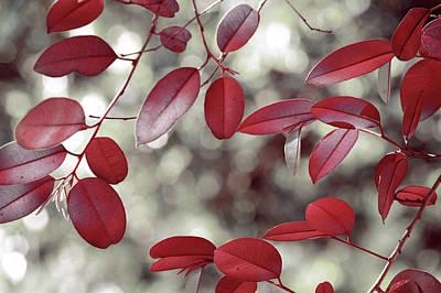Photograph - Red Foliage by Jenny Rainbow