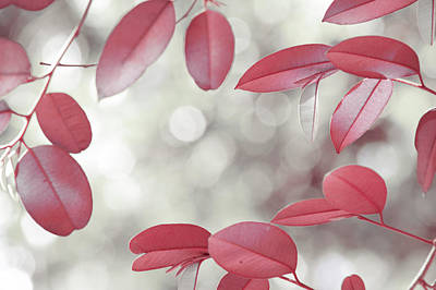 Photograph - Red Foliage. Silver Light by Jenny Rainbow